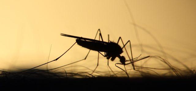 Aкцијa сузбијања комараца 12. јула 2019 7